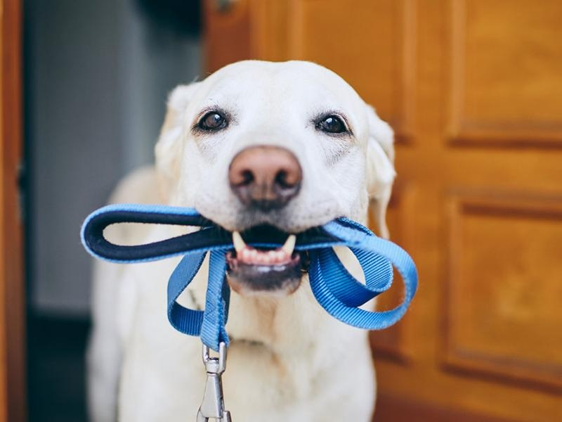 Purchasing Pet Supplies For instance Dog Clippers