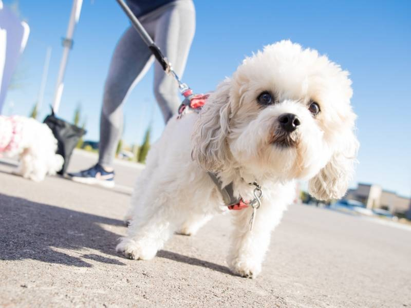 Know Beyond Concerning The Wellness within the Pet